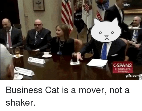 Funny, Cat, and C-Span: Today  O O  GSPAN2  C-span org  gifs.co Business Cat is a mover, not a shaker.