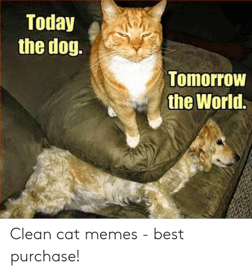 Today The Dog Tomorrow The World Clean Cat Memes Best