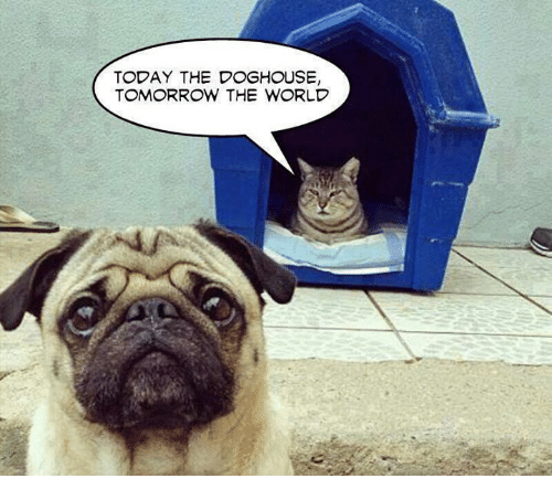 today the doghouse tomorrow the world 24341194 ✅ 25 best memes about doghouse doghouse memes,Doghouse Meme