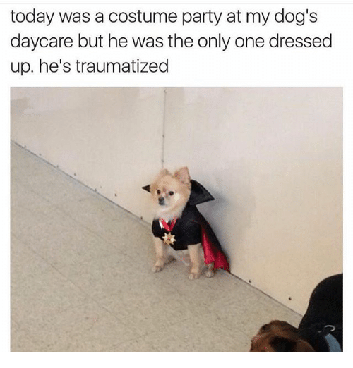 Today Was A Costume Party At My Dogs Daycare But He Was The Only