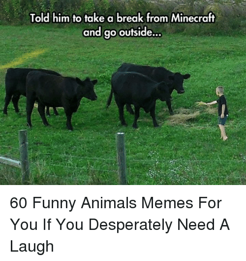 Animals, Funny, and Funny Animals: Told him to take a break from Minecraft  and go outside... 60 Funny Animals Memes For You If You Desperately Need A Laugh