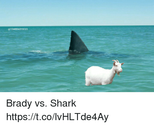 Tom Brady, Shark, and Brady: @TOMBRADYSEGO Brady vs. Shark https://t.co/lvHLTde4Ay