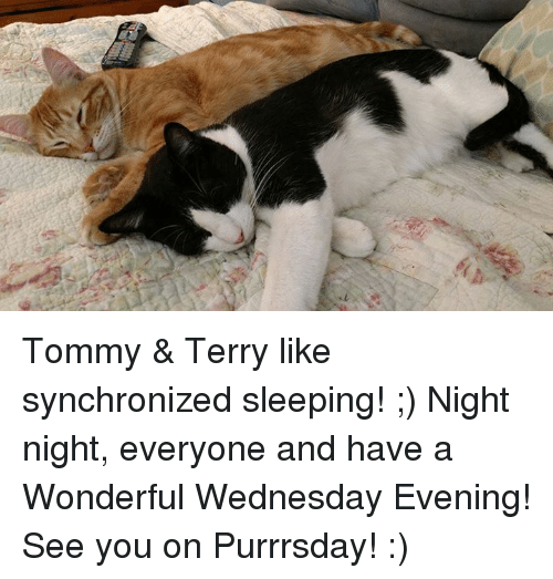 Memes, Wednesday, and Sleeping: Tommy & Terry like synchronized sleeping! ;) Night night, everyone and have a Wonderful Wednesday Evening! See you on Purrrsday! :)