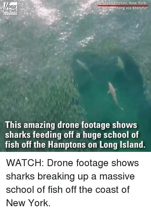 Drone, Memes, and New York: ton, New Yor  erg via Storyful  NEWS  This amazing drone footage shows  sharks feeding off a huge school of  fish off the Hamptons on Long Island WATCH: Drone footage shows sharks breaking up a massive school of fish off the coast of New York.