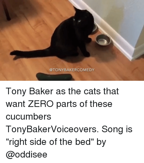 """Memes, Zero, and Songs: TONY BAKER COMEDY Tony Baker as the cats that want ZERO parts of these cucumbers TonyBakerVoiceovers. Song is """"right side of the bed"""" by @oddisee"""