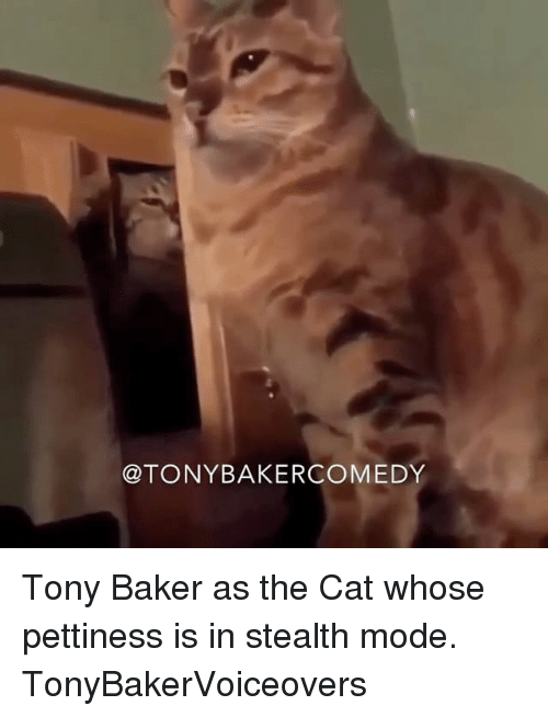 Memes, 🤖, and Cat: TONY BAKERCOMEDY Tony Baker as the Cat whose pettiness is in stealth mode. TonyBakerVoiceovers