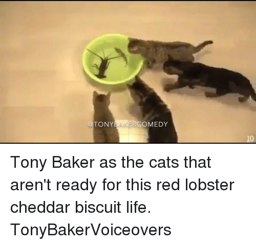 Life, Memes, and Red Lobster: TONY  ERCOMEDY  10 Tony Baker as the cats that aren't ready for this red lobster cheddar biscuit life. TonyBakerVoiceovers