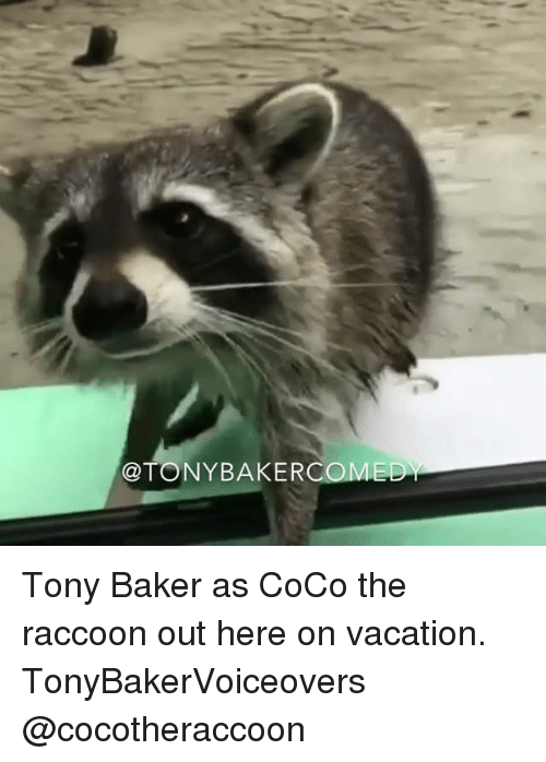 25 best memes about the raccoon the raccoon memes