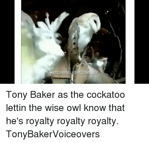 Memes, 🤖, and Owl: @TONYBAKERCOMEDY Tony Baker as the cockatoo lettin the wise owl know that he's royalty royalty royalty. TonyBakerVoiceovers