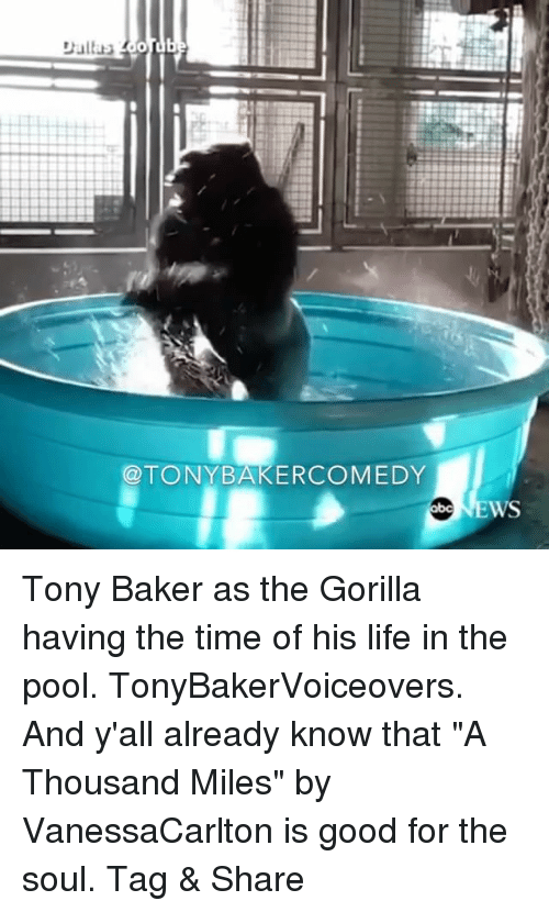 """Life, Memes, and Good: @TONYBAKERCOMEDY Tony Baker as the Gorilla having the time of his life in the pool. TonyBakerVoiceovers. And y'all already know that """"A Thousand Miles"""" by VanessaCarlton is good for the soul. Tag & Share"""