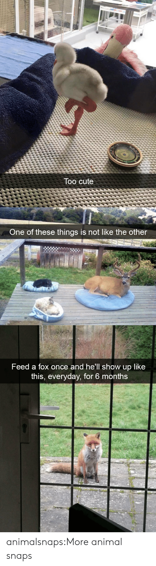 Cute, Target, and Tumblr: Too cute   One of th  ese things is not like the other   Feed a fox once and he'll show up like  this, everyday, for 6 months animalsnaps:More animal snaps