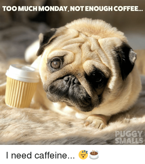 TOO MUCH MONDAY NOTENOUGH COFFEE PUGGY SMALLS I Need Caffeine ... #tooMuchCoffee