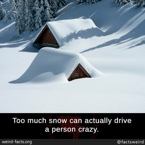 Crazy, Facts, and Memes: Too much snow can actually drive  a person crazy.  weird-facts.org  @factsweird