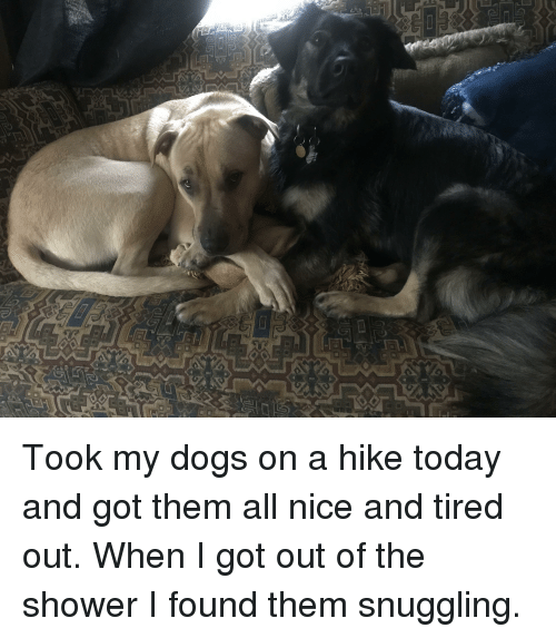 Dogs, Shower, and Today