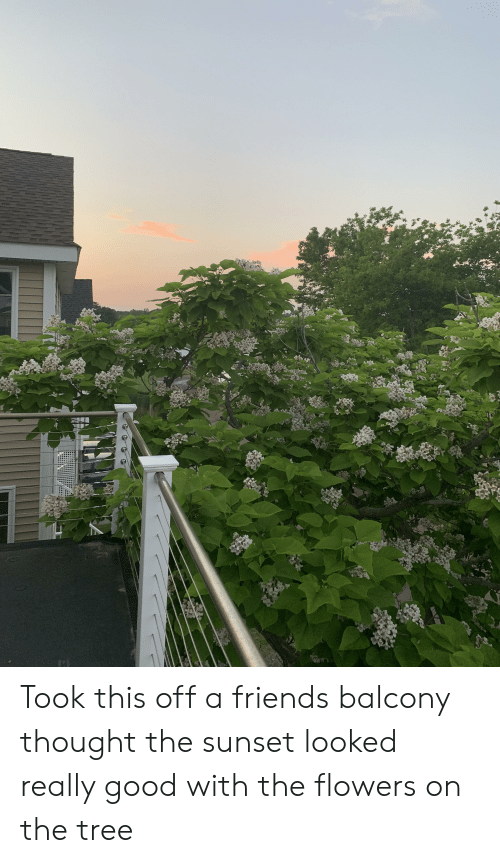 Friends, Flowers, and Good: Took this off a friends balcony thought the sunset looked really good with the flowers on the tree