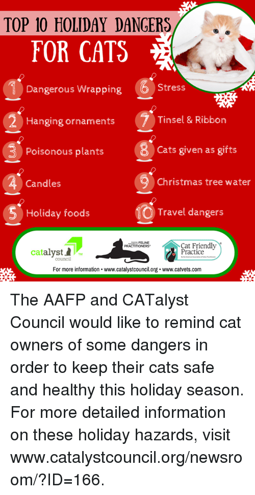 memes christmas tree and travel top 10 holiday dangers for cats 6 1