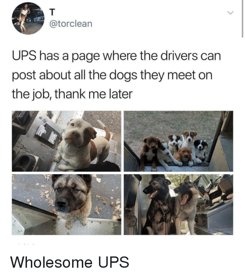 Dogs, Ups, and Wholesome: @torclearn  UPS has a page where the drivers can  post about all the dogs they meet on  the job, thank me later Wholesome UPS