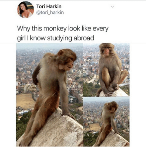 Funny, Girl, and Monkey: Tori Harkin  @tori_harkin  Why this monkey look like every  girl I know studying abroad