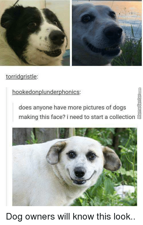 Pictures Of Dogging