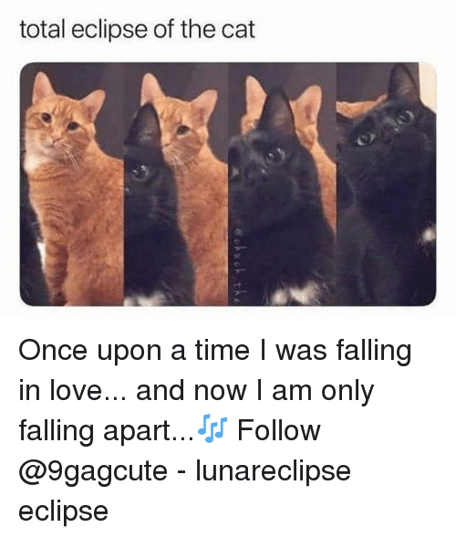 Total Eclipse Of The Cat Once Upon A Time I Was Falling In Love And