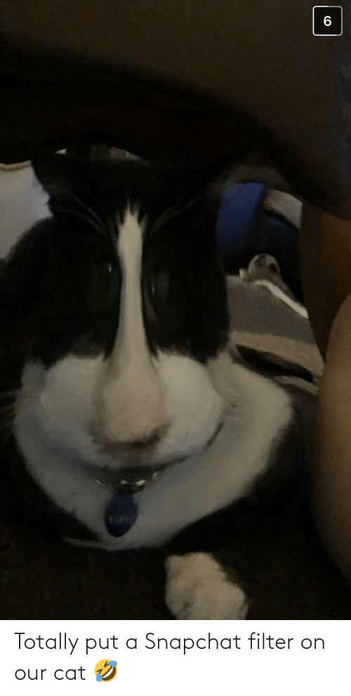 Snapchat, Cat, and Filter: Totally put a Snapchat filter on our cat 🤣