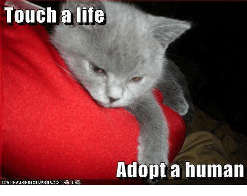 touch a life adopt a human i canhas cheezburger co 23150641 ✅ 25 best memes about cheezburger cheezburger memes,Cheezburger Memes