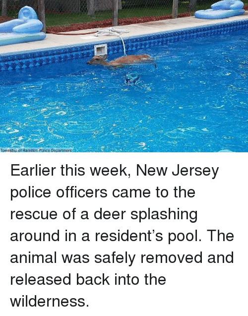 Deer, Memes, and Police: Township of Hamilton Police Department Earlier this week, New Jersey police officers came to the rescue of a deer splashing around in a resident's pool. The animal was safely removed and released back into the wilderness.