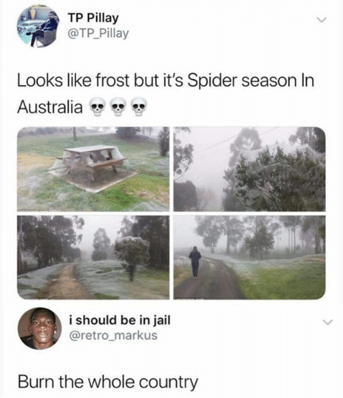 Funny, Jail, and Spider: TP Pillay  @TP Pillay  Looks like frost but it's Spider season In  Australia  i should be in jail  @retro_markus  Burn the whole country