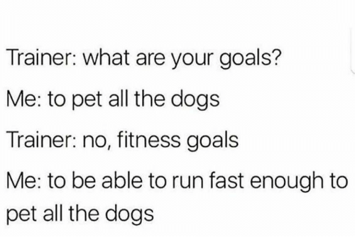 Dogs, Goals, and Run: Trainer: what are your goals?  Me: to pet all the dogs  Trainer: no, fitness goals  Me: to be able to run fast enough to  pet all the dogs