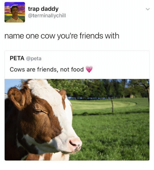 Trap Daddy Chill Name One Cow You're Friends With PETA Cows