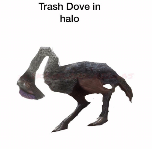 Dove, Halo, and Trash: Trash Dove in  halo
