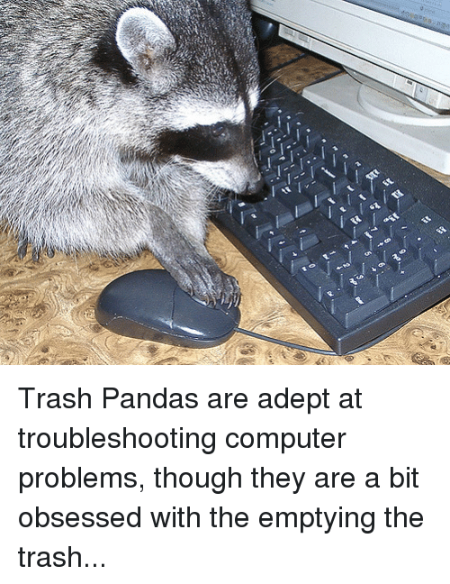Computers, Selfie, and Trash: Trash Pandas are adept at troubleshooting computer problems, though they are a bit obsessed with the emptying the trash...