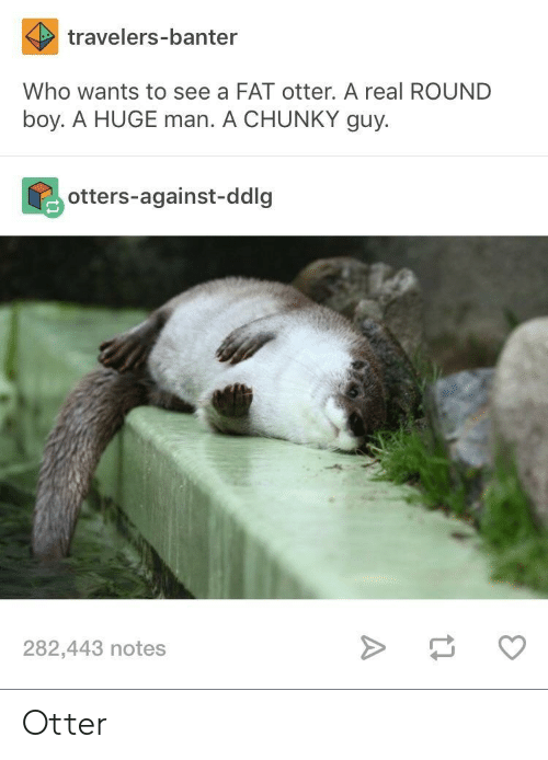 Bilbo, Otters, and Fat: travelers-banter  Who wants to see a FAT otter. A real ROUND  boy. A HUGE man. A CHUNKY guy.  otters-against-ddlg  282,443 notes Otter