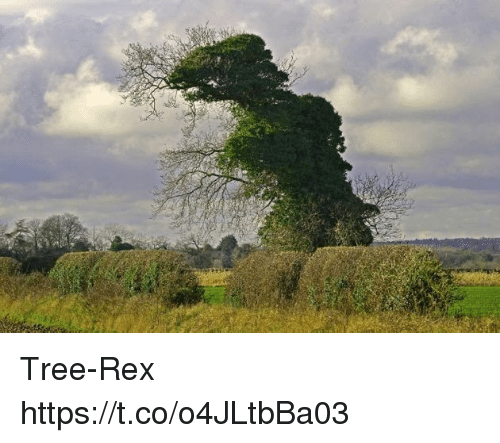Tree, Faces-In-Things, and Rex: Tree-Rex https://t.co/o4JLtbBa03