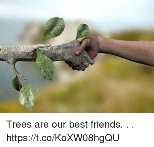 best friend trees Poems were made by fools like me we trees are your best friends he plants the friend of sun and sky he plants the flag of breezes free.