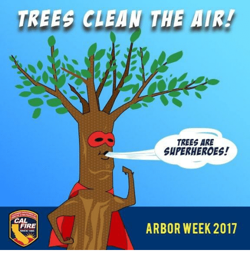 Weed Air And Arbor Trees Clean Tae Are Shperheroes