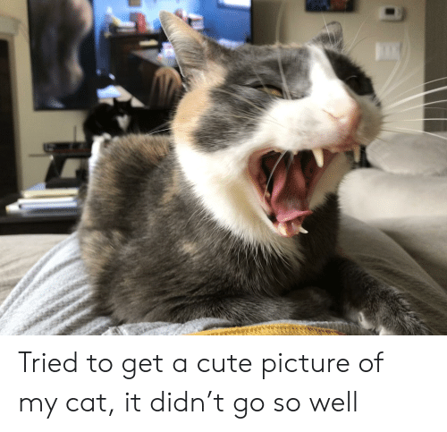 Cute, Cat, and Picture: Tried to get a cute picture of my cat, it didn't go so well