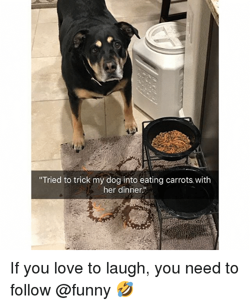"Funny, Love, and Her: ""Tried to trick my dog into eating carrots with  her dinner."" If you love to laugh, you need to follow @funny 🤣"