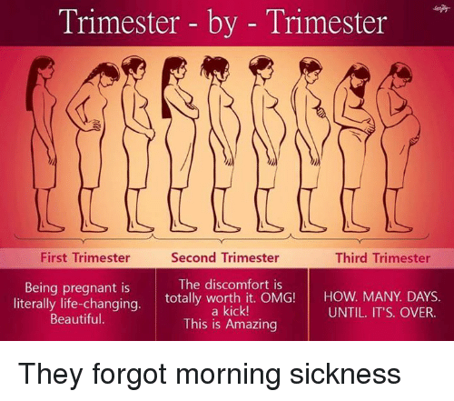 Trimester By Trimester Second Trimester First Trimester Third Trimester Being Pregnant Is The Discomfort Is Literally Life Changing Totally Worth It Omg How Many Days Kick Until It S Over Beautiful This Is Amazing