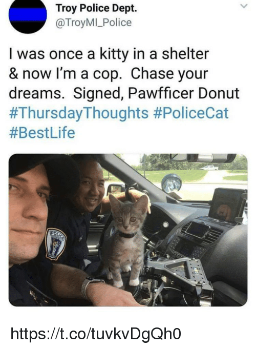 Memes, Police, and Chase: Troy Police Dept.  @TroyMI_Police  I was once a kitty in a shelter  & now I'm a cop. Chase your  dreams. Signed, Pawfficer Donut  https://t.co/tuvkvDgQh0