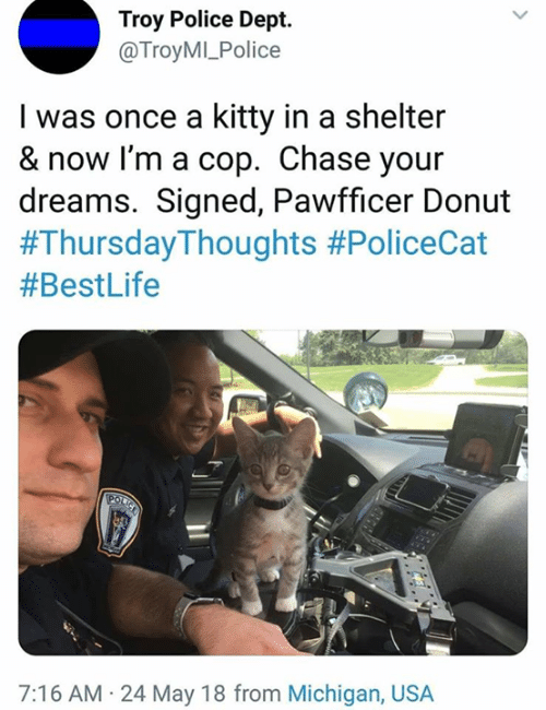 Memes, Police, and Chase: Troy Police Dept.  @TroyMI_Police  I was once a kitty in a shelter  & now I'm a cop. Chase your  dreams. Signed, Pawfficer Donut  #Thursday-Thoughts #PoliceCat  #BestLife  7:16 AM 24 May 18 from Michigan, USA