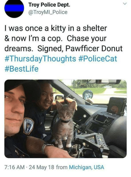 Police, Chase, and Michigan: Troy Police Dept.  @TroyMILPolice  I was once a kitty in a shelter  & now I'm a cop. Chase your  dreams. Signed, Pawfficer Donut  #ThursdayThoughts #PoliceCat  #BestLife  7:16 AM 24 May 18 from Michigan, USA
