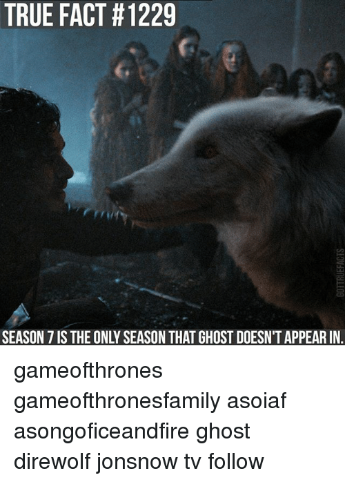 Memes, True, and Ghost: TRUE FACT #1229  SEASON 7 IS THE ONLY SEASON THAT GHOST DOESN'T APPEAR IN. gameofthrones gameofthronesfamily asoiaf asongoficeandfire ghost direwolf jonsnow tv follow