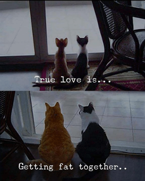 Love, Memes, and True: True love is..  Getting fat together. .