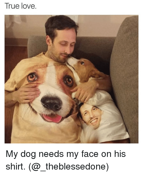 true love my dog needs my face on his shirt 8503713 ✅ 25 best memes about love my dogs love my dogs memes