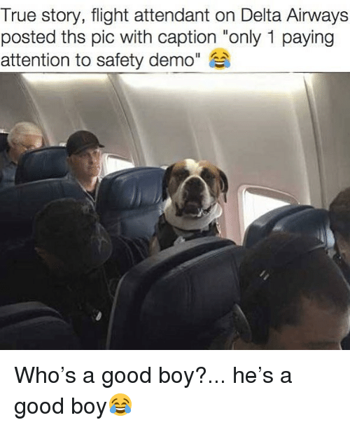 """Funny, True, and Delta: True story, flight attendant on Delta Airways  posted ths pic with caption """"only 1 paying  attention to safety demo"""" Who's a good boy?... he's a good boy😂"""
