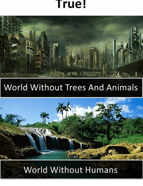 Animals, Memes, and True: True!  World Without Trees And Animals  World Without Humans