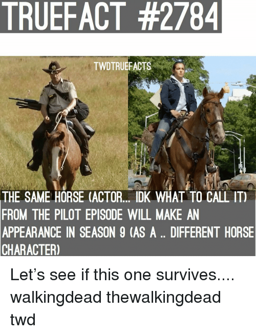 Memes, Horse, and 🤖: TRUEFACT #2784  TWDTRUEFACTS  THE SAME HORSE (ACTOR. DK WHAL TO CALL IT)  FROM THE PILOT EPISODE WILL MAKE AN  APPEARANCE IN SEASON 9 (AS A.. DIFFERENT HORSE  CHARACTER) Let's see if this one survives.... walkingdead thewalkingdead twd