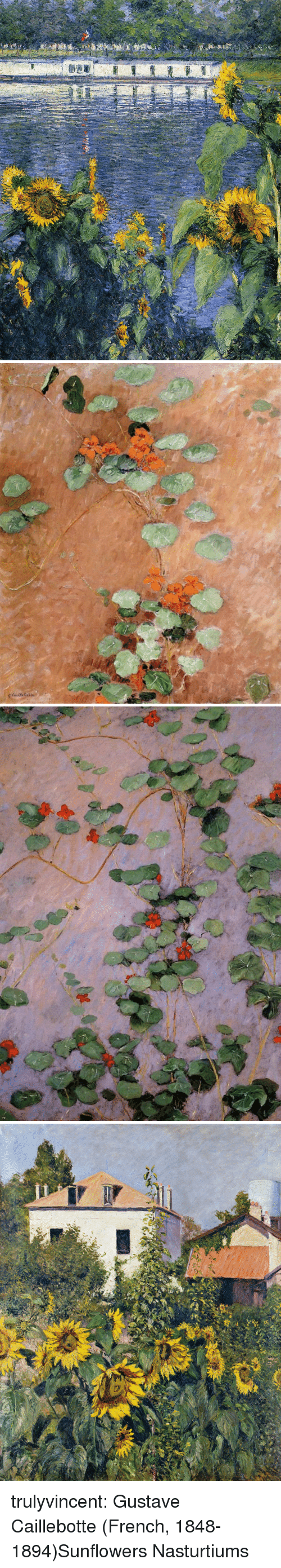 Tumblr, Blog, and French: trulyvincent: Gustave Caillebotte (French, 1848-1894)Sunflowers  Nasturtiums