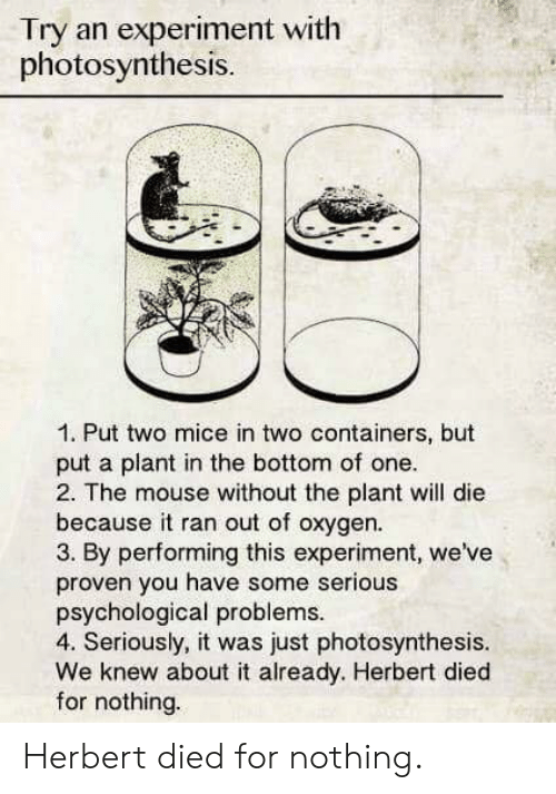 Mouse, Oxygen, and Photosynthesis: Try an experiment with  photosynthesis.  1. Put two mice in two containers, but  put a plant in the bottom of one  2. The mouse without the plant will die  because it ran out of oxygen.  3. By performing this experiment, we've  proven you have some serious  psychological problems  4. Seriously, it was just photosynthesis.  We knew about it already. Herbert died  for nothing. Herbert died for nothing.